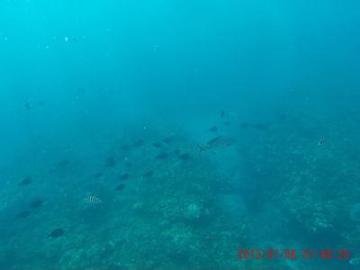 Miestne koraly lákajú množstvo rybičiek