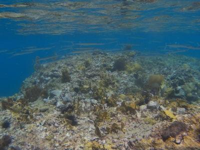 Pri šnorchlovaní na Champagne Beach môžete vidieť okrem bubliniek i koraly a rybičky