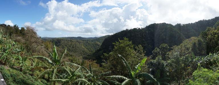 Bujná vegetácia ostrova Svätá Lucia