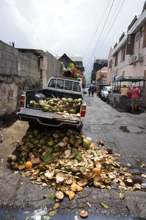 Roseau - dáte si kokosový orech?