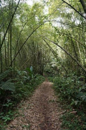 Bambusová brána na ceste k La Soufrière