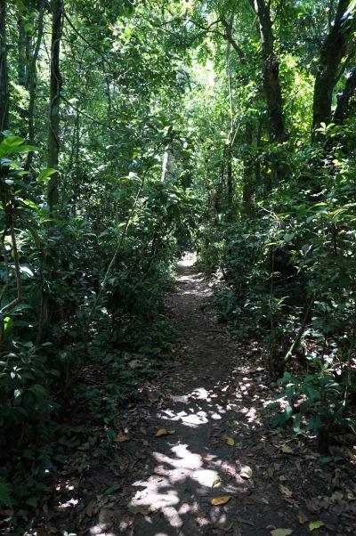 Cestička džungľou na horu Corcovado v Riu de Janeiro