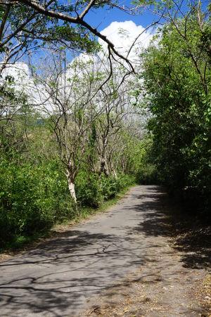 Cesta k pevnosti lemovaná stromami