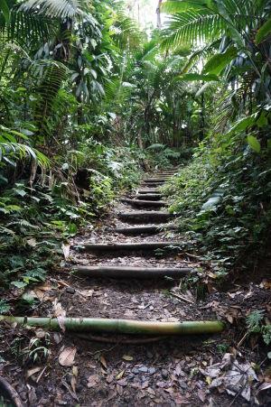 Bambusové schody na ceste k La Soufrière