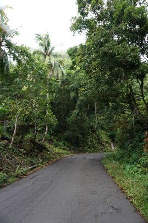 Cesty sú na Dominike obkľúčené zeleňou