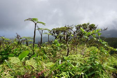 Posledné vyššie rastliny na ceste k La Soufrière