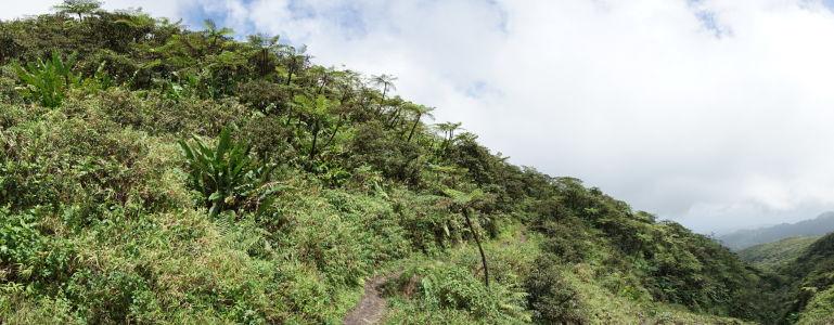 Cestička k La Soufrière