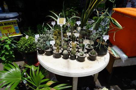 Kúpite tu dokonca aj kaktusy