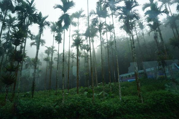 Vegatácia cestou do Ališanu sa mení postupne z tropickej na subtropickú až vysokohorskú