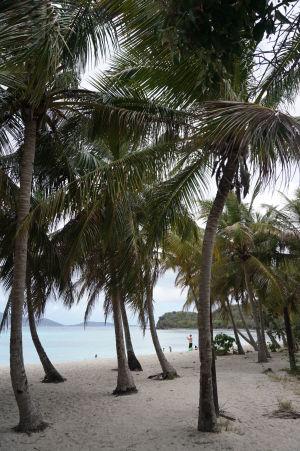 Palmy na pláži Smuggler's Cove