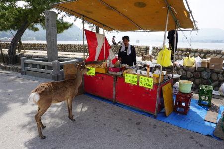 Jeleň nakupuje v stánku v Icukušime