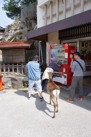 Jeleň nakupuje v automate v Icukušime