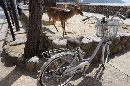Jeleň sa chystá na bicykel v Icukušime