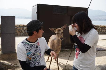 Jeleň čaká na pamlsok od turistov v Icukušime