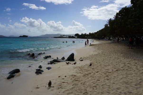 Pláž Sapphire Beach na ostrove Svätý Tomáš obľubujú ľudia i kačičky