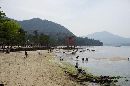 Pláž v Icukušime, v pozadí brána torii, v popredí ľudia hľadajúci mušle