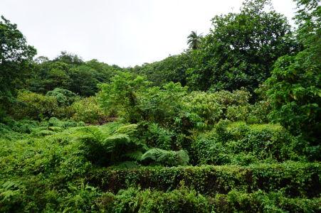 Dominika je jednoducho zelený ostrov