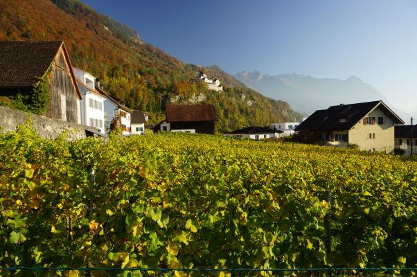 Vinice pod hradom Vaduz