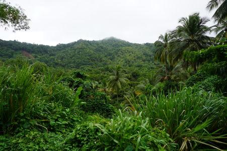 Zelená panoráma Dominiky