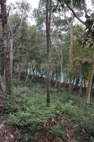Lesík pri Jazere Slnka a Mesiaca (Sun Moon Lake) na Taiwane