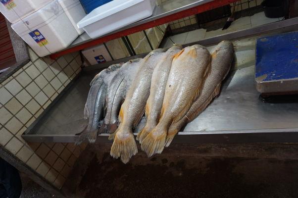 Predajca čerstvých rýb na rybom trhu v São Luís