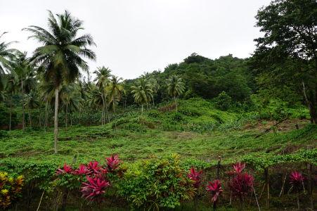 Zelené kopce Dominiky s udržiavanými kvetmi okolo cesty