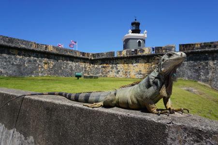 Leguán na múre pevnosti a maják