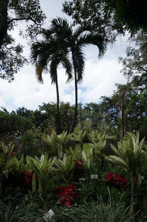 Botanická záhrada na Guadeloupe