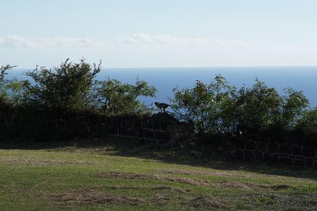Opice sú na tomto kopci všadeprítomné