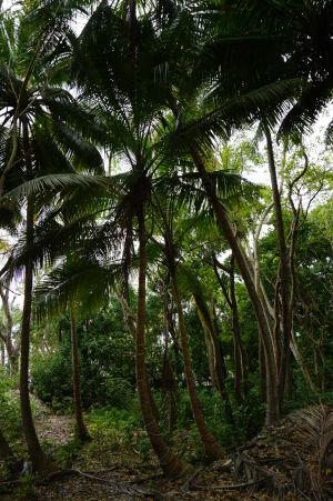 Hustý palmový les neďaleko pláže