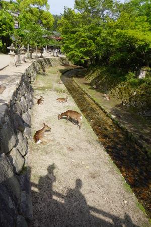 Oddychujúce jelene pri potôčiku v Icukušime