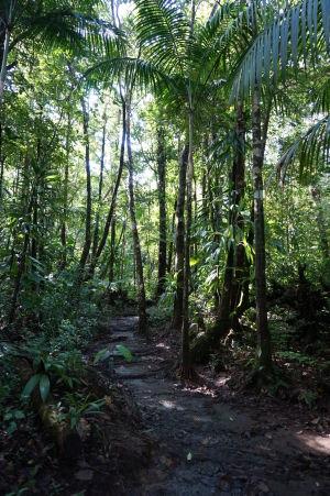 Príroda obkolesujúca vodopády Spanny Falls je nádherne zelená - Cestička k vodopádu