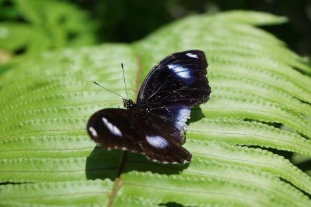 Motýlia farma na Svätom Martine