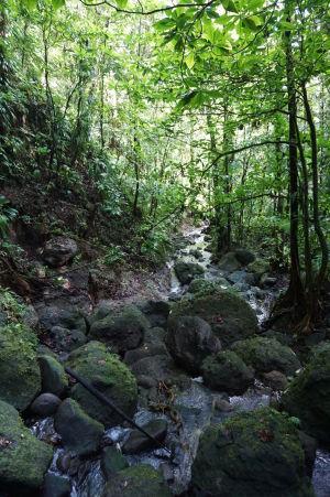 Príroda obkolesujúca vodopády Spanny Falls je nádherne zelená