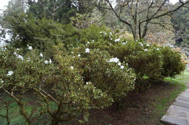 Magnolia Garden (Záhrada magnólií) v Ališane