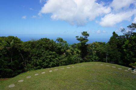 Uprostred Tobaga sa rozprestiera tropický les