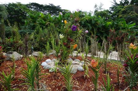 Kvety v botanickej záhrade na Guadeloupe