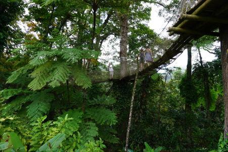 V botanickej záhrade Jardin de Balata na Martiniku majú aj cestičku v korunách stromov