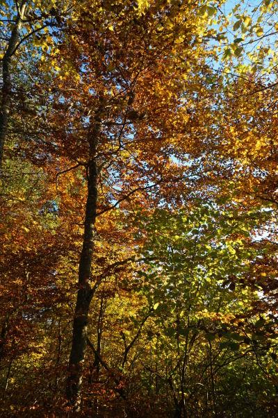 Jesenná idylka na Uetlibergu