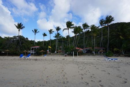 Palmy lemujúce záliv Lambert Bay
