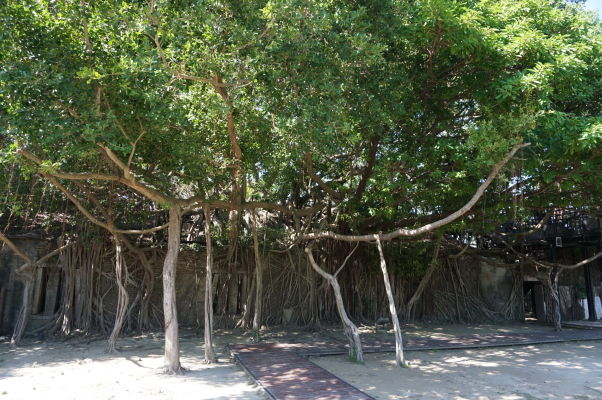 Stromový dom (Treehouse) v Tchaj-nane - korene banyánov pohlcujú múry bývalého skladu