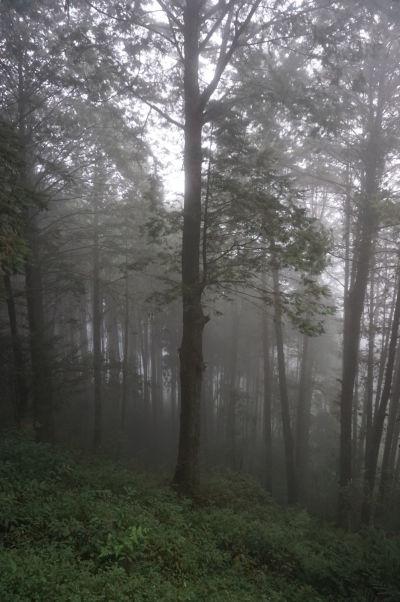 Keď do Ališanu zavítajú oblaky, atmosféra celého cyprusového lesa sa zmení