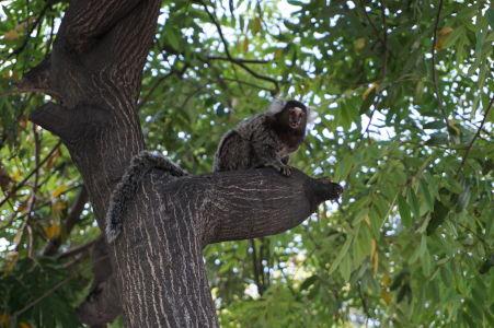 Opička v parku v meste