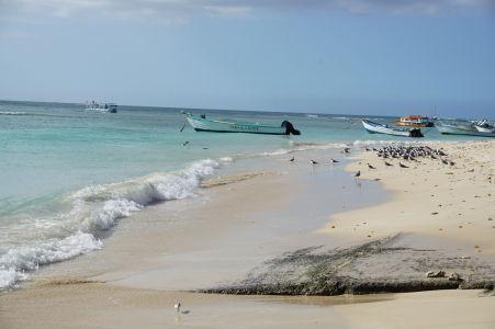 Čajky čakajú, čo im rybári dnes privezú