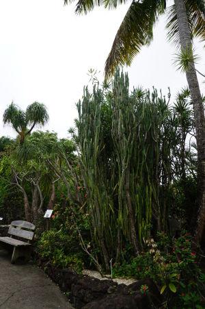 Kaktusy v botanickej záhrade na Guadeloupe