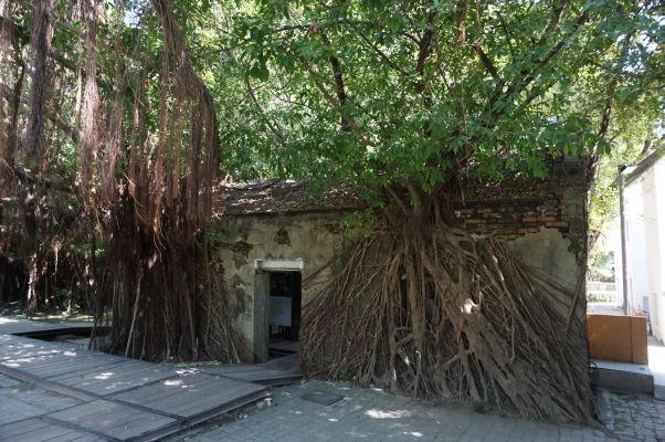 Stromový dom (Treehouse) v Tchaj-nane - banyány obrastajú budovu bývalého skladu