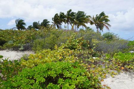 Palmy v Shoal Bay