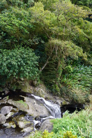 Vodopád Concord je zasadený v krásne zelenej prírode
