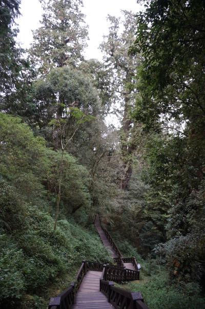 Cestička v cyprusovom lese v Ališane