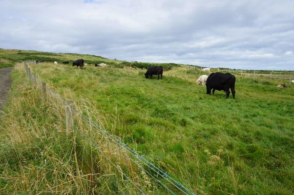 Cestička na útesoch neďaleko Obrovho chodníka v Severnom Írsku